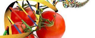 Alimentos transgénicos ¿es saludable consumirlos, o no ?